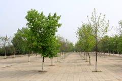 树在一个公园,在一个风景区 免版税库存照片