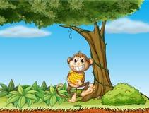 一只猴子用在一棵树附近的香蕉与藤植物 图库摄影