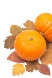 在白色隔绝的秋叶的两个桔子南瓜 库存图片