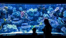 父母和孩子由水族馆 库存照片