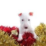 在圣诞节装饰品的俏丽的杂种犬宠物 免版税库存照片