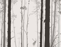Силуэт леса с оленями Стоковое Фото