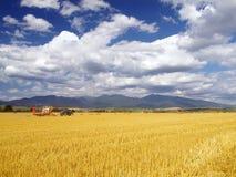 麦子收获在斯洛伐克 免版税库存照片