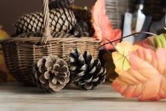 为秋天的园艺工具 免版税库存照片