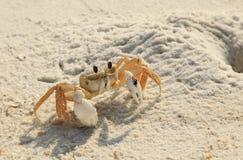 Рискованые начинания рака призрака из его отверстия на белом пляже Флориды песка Стоковые Фото
