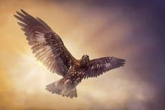 老鹰飞行 图库摄影