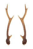 Рожочки оленей Стоковое Фото