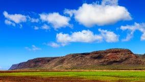 农田在考艾岛 免版税库存图片