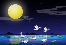 在池塘的鸭子月光风景的 免版税库存图片