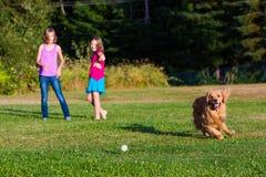 追逐球的狗 免版税图库摄影