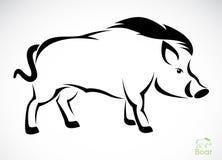 公猪的传染媒介图象 免版税库存图片