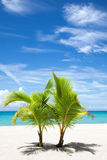 在天堂海岛上的棕榈树 免版税库存照片
