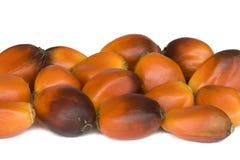 结果实油棕榈树 免版税库存照片
