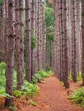 高大的树木被定购的立场  免版税库存照片