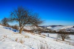 在山坡的光秃的树在冬天蓝天下 免版税库存图片