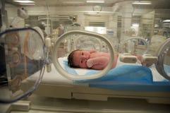 新出生的拉丁女婴 库存照片