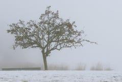 薄雾沈默  库存图片