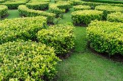 绿色草坪在一个五颜六色的环境美化的规则式园林里。 免版税库存图片