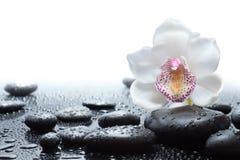 白色兰花和湿黑石头 免版税库存图片