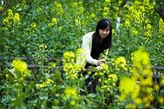 Νέα κυρία στους τομείς λουλουδιών συναπόσπορων Στοκ εικόνες με δικαίωμα ελεύθερης χρήσης