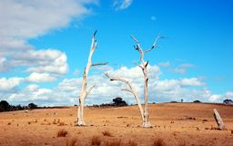 在内地澳大利亚人的两棵烧伤树。 库存图片