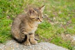 Молодое усаживание котенка Стоковое Фото