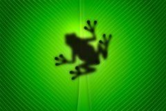 青蛙 免版税库存照片