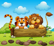 Ένα λιοντάρι και ένα κρύψιμο τιγρών Στοκ εικόνες με δικαίωμα ελεύθερης χρήσης