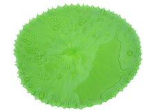 水滴在美丽的莲花的在池塘生叶 免版税库存图片