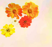 与百日菊属花束的贺卡  免版税图库摄影