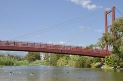 鸭子在桥梁下 免版税库存照片