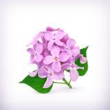 Ιώδη λουλούδια Στοκ φωτογραφίες με δικαίωμα ελεύθερης χρήσης