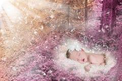 睡觉在一个不可思议的森林里的美丽的飞过的婴儿 库存图片