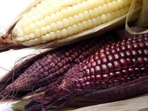 煮沸的黑玉米 免版税库存照片