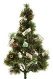 冷杉木的图片与很多金钱的 库存图片