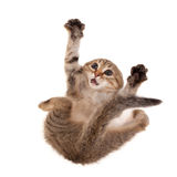 害怕的小猫 免版税库存图片