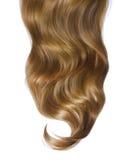 在白色的卷曲棕色头发 免版税库存图片