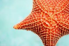 Красные морские звёзды Стоковые Изображения