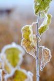 秋天霜。 库存照片