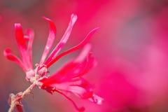 紫色花 图库摄影