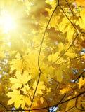 秋天黄色叶子和太阳 免版税图库摄影