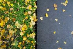 Упаденные кленовые листы на тротуаре Стоковые Изображения RF