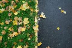 Упаденные кленовые листы на тротуаре Стоковые Фотографии RF