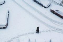 Прогулка зимы в городе Стоковые Изображения
