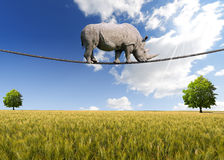 走在绳索的犀牛 库存照片