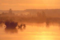 在沼泽的巨大有薄雾的日落 库存图片