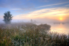 在沼泽的巨大有薄雾的日落 库存照片