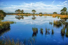 在一个镇静沼泽湖的反射 图库摄影