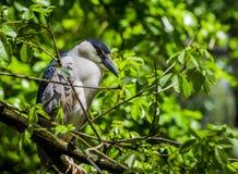 Πουλί σε ένα δέντρο Στοκ Φωτογραφία