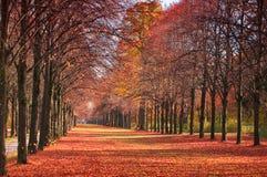 秋天森林道路 库存照片